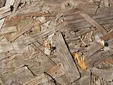 A wood texture