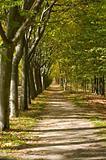 Mediterranean Walkway Forest