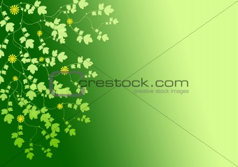 Abstract background from plants
