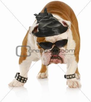 tough biker dog