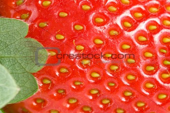 Green leaf and juicy strawberry