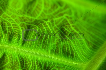 Abstract Leaf Macro