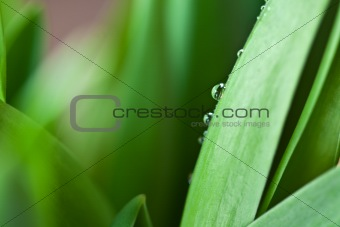 Dew Drop on Green Leaf