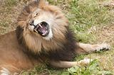Wild animals -