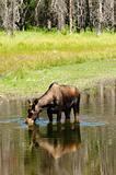 Tetons & wildlife