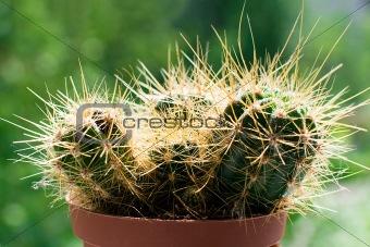 Cactus Medical