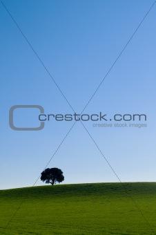 Alone tree in a green meadow under a blue sky