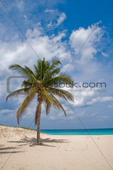 Palm in Wind on a Sandy Beach