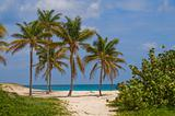 Palms in Wind on a Sandy Beach