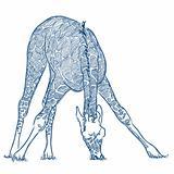 Vector pen sketch of a giraffe