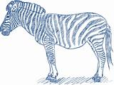 Vector pen sketch of a zebra
