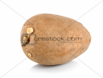 One raw potatoe isolated