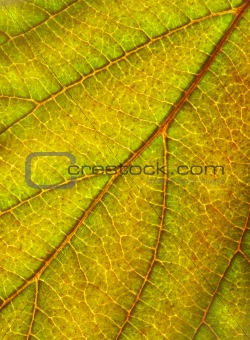 green yellow leaf textrue background