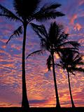 Palm trees on the beach at sunset