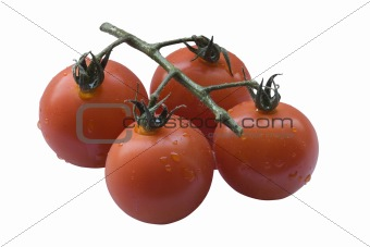 Four cherry tomatoes isolated on white