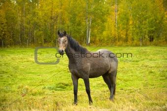 Single horse in fall field