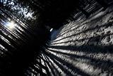 Winter Shadow Flare