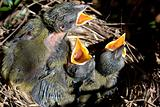 Beutiful baby birds