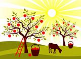 apple tree orchard