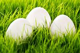 three white easter eggs in grass