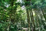 Pyrenees trees forest mountain summer scenics