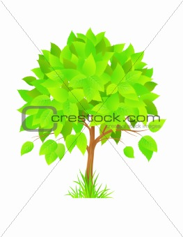 Beautiful green tree