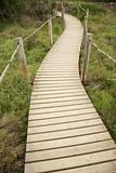 wood footbridge