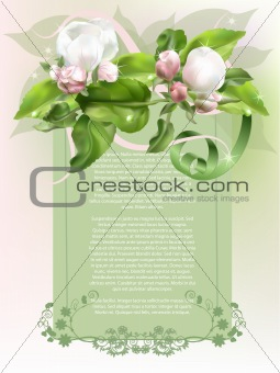 Apple bud postcard