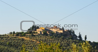 Olive Plantation
