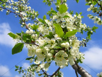 branch of a blossoming tree