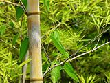Bamboo branch detail