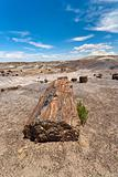 Petrified Forest National Monument