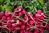 Buch of fresh radishes