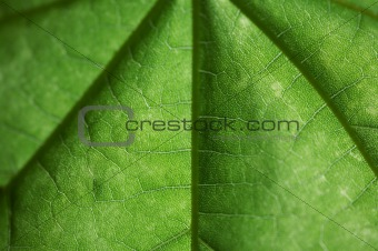 green sheet close up