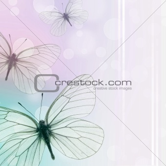 Beautiful Background With Butterflies (1 of set)