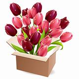 Open box full of tulips