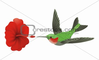 Green hummingbird vector