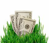 Growing Money. Financial concept