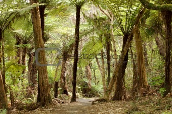 Jungle in New Zealand