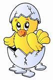 Cute chicken in broken eggshell
