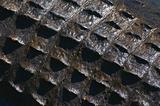 American Alligator skin texture