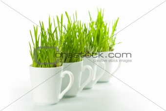 green grass in coffee cups