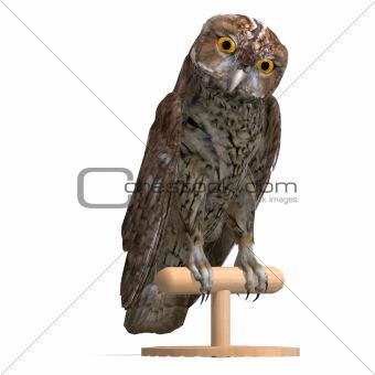 Tawny Owl Bird