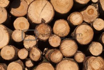 Close Up Timber