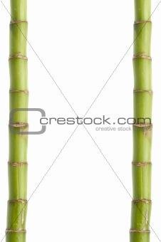 Fresh Bamboo Stalk Border or Background