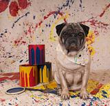 Artist Pug