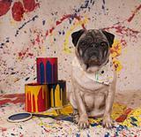 Artist Pug