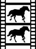 Horse on Film
