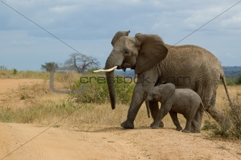 Elephant with child