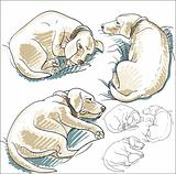 Sketches of dog